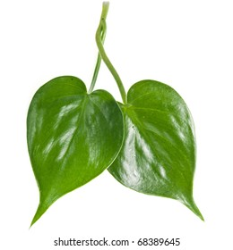 two green leaves shape heart isolated on white