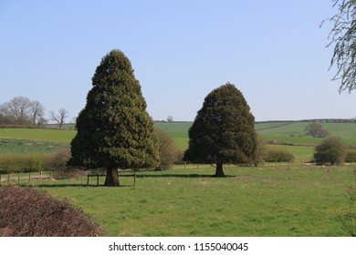 two green trees
