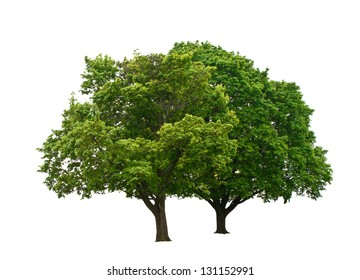 two green trees isolated on white