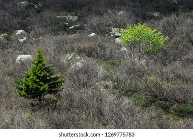 Two green Trees in a monochromatic Background