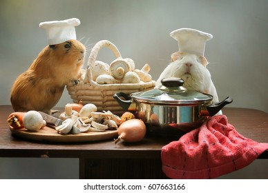 Two Guinea pigs chef cooking in kitchen