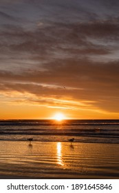 Two gulls by the beach during amazing view of sun coming out. Vertical photography