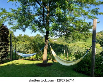Two hammocks tying between trees near vineyard, summer in Italy. Peaceful area to rest