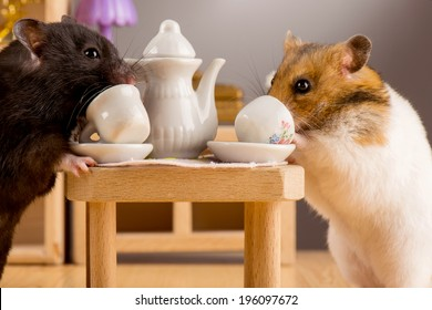 two hamsters in a room drinking tea and socialize / hamster drink tea