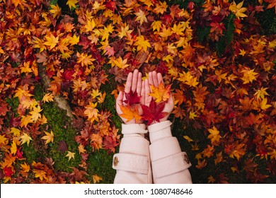 two hand of a Asian girl holding carefully a red maple leaf over the moss background and the autumn leaves on the floor, Autumn season in enkoji temple, kyoto, japan