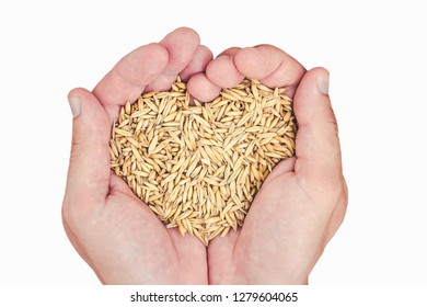Two hand holding oat seeds in heart shape isolated on white.