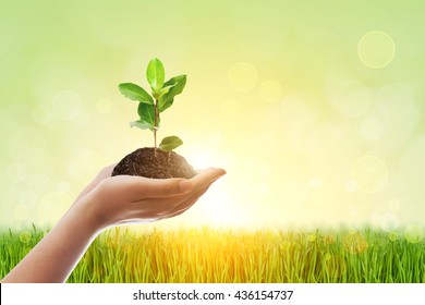 Two Hand holding young plant on green nature blur bokeh background . World Day for Water