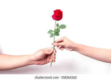 two hands with a beautiful rose.