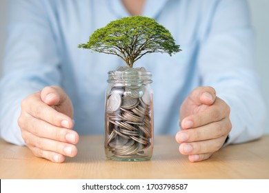 Two hands of businessman protecting tree growth op on coins in jar. This is saving and investment concept.
