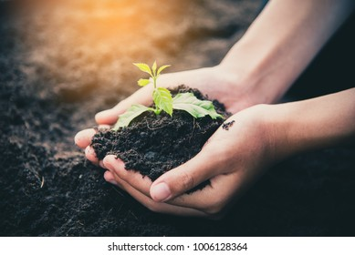 Two hands of was carrying of potting seedlings to be planted into the soil.- concept love world