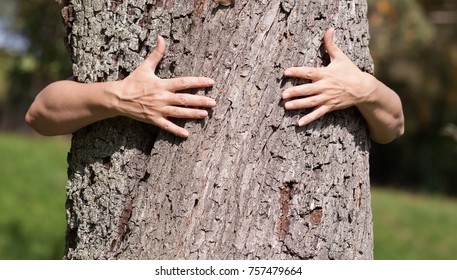 Two hands are clasping a tree