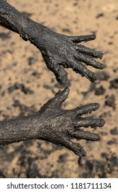 Two hands covered with muddy black sand on the beach