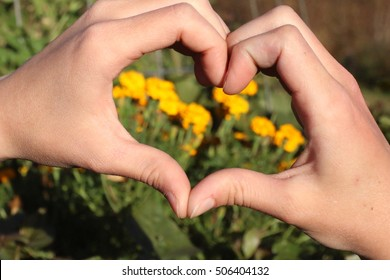 Two Hands Forming A Heart In Front Of Bright Yellow Marigold Flowers Growing In A Raised Garden Bed On A Farm In The Mountains Of South West Virginia