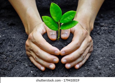 Two hands holding and caring a young green plant / Planting tree / Love and protect nature / Save the world, heal the earth