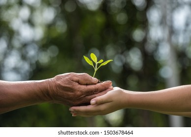 two hands holding together a green young plant. world environment day and sustainable environment in elderly people and children's volunteer hands. ecology concept