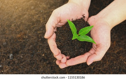 Two hands holding a young green plant, closeup hands environment heal earth day and save the world together harmony peaceful green background concept