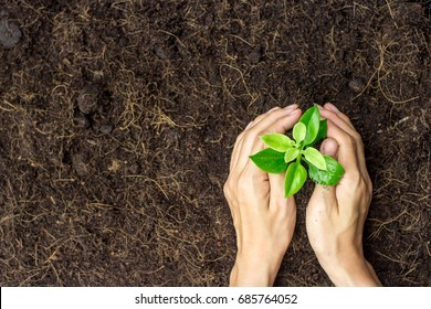Two hands holding young plant with soil.World environment day and sustainable environment concept