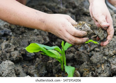 Two hands are planting trees. save the world.World Soil Day