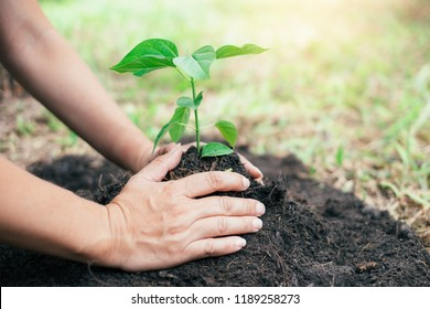 Two hands were holding seedling to be planted. Save the world concept.