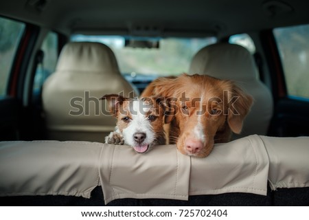 two happy dogs in
