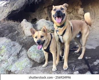 Two happy dogs in a cave.