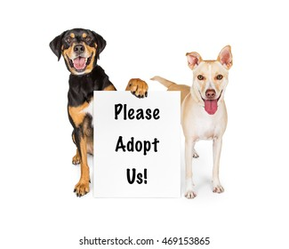 Two happy dogs holding a sign saying Please Adopt Us