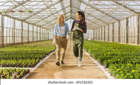 Two Happy Industrial Greenhouse Workers Walk Through Rows of Colorful Flowers and Green Vegetables. They Smile and are Happy with Organic Food They're Growing.