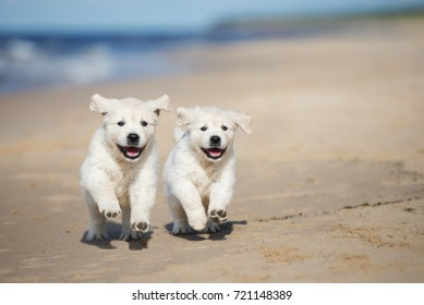 two happy puppies running on a beach