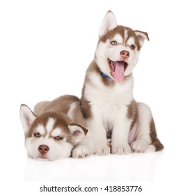 two happy siberian husky puppies posing together on white