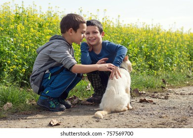 Two happy smilling boys playing with and patting white domestic cat in rural environment.