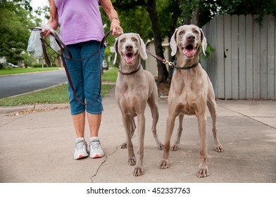 Two happy twin weimaraners on a sidewalk