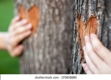 two heart carved on a tree and two palms together forever