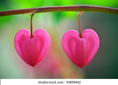 Pink heart shaped flower images stock photos vectors shutterstock two heart flower conceptual design mightylinksfo