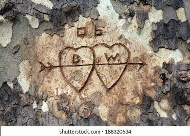 Two hearts with initials carved in tree bark