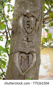two hearts with initials, carved in a tree bark, amorous sign for everlasting love, outdoor. soft background