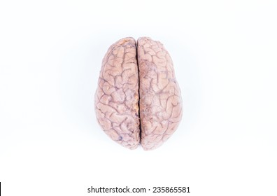 two hemisphere of a real human brain isolated on white