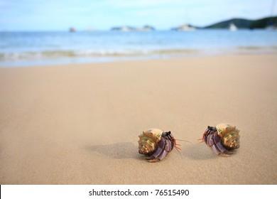 two hermitcrab on the beach of phuket thailand