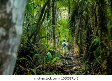Two hikers make their way through the thick jungle of Corcovado National Park, Costa Rica