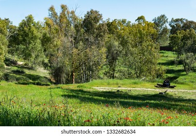 two hikers resting on a log in the wildflowers and lush grass in the ruhama forest in the western negev in israel