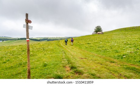 Two hikers walk on the pilgrimage way to santiago de Compostela through the meadows of Aubrac