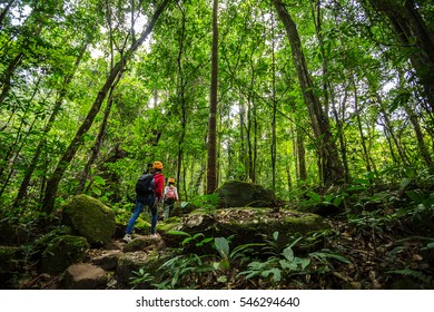 Two hikers walking in the woods with a rich and mature trees,Trekker