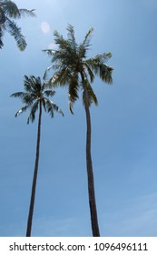 Two hipster palm trees on blue sky background