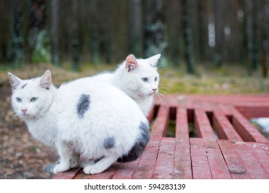 Two homeless White cat with spots and beautiful azure eyes sits on a bench on the street. Focus on the cat sitting on the middle.