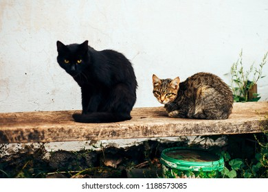 two homless cats black and brown sits in street