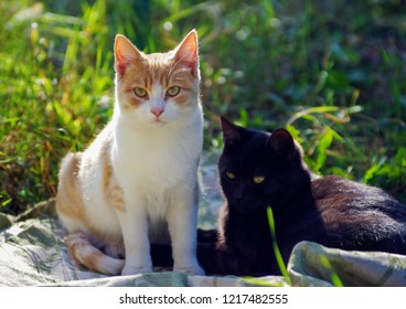 two homless cats sits in street