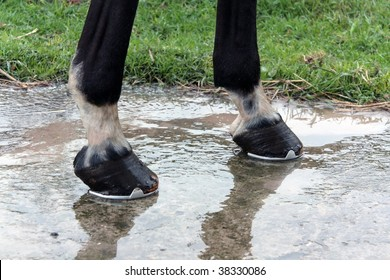 Two hooves after water washing.