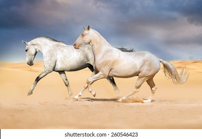 Two  horse in the desert