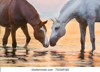 Two horse drink water at sunrise