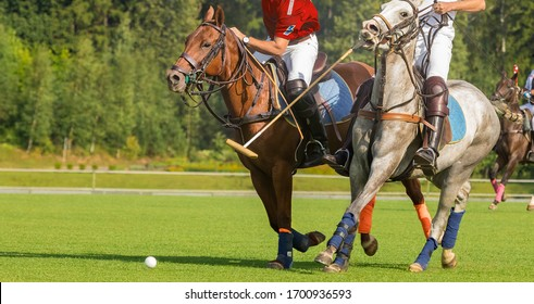 Two horse polo players strikes the ball with a hammer. Two polo pony runs. Summer season, green cut lawn field. The forest is in the background. Copyspace