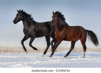 Two horse run fast in snow field